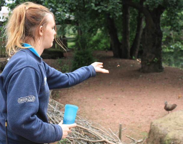 Abbie the intern feeding the birds at Chester Zoo