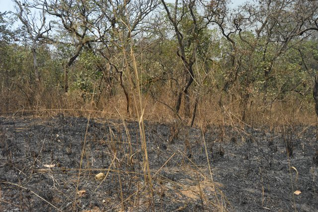 An area of forest which has suffered repeated burning