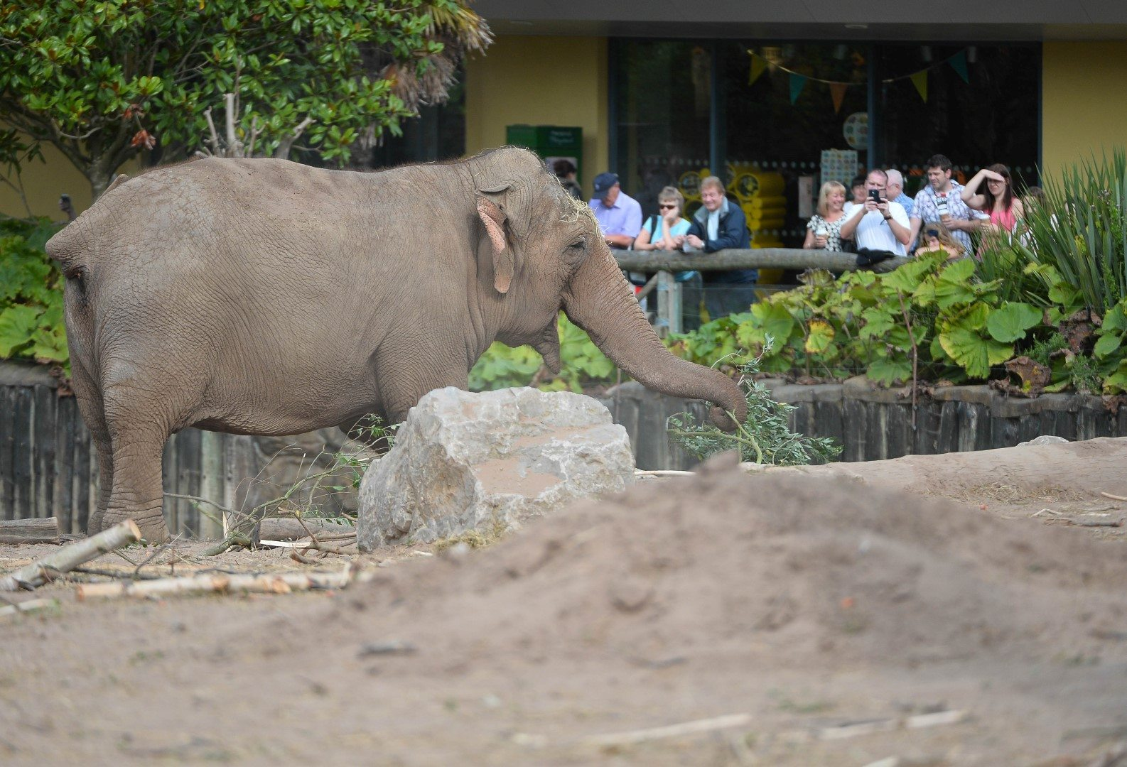 Elephant and visitors at Chester Zoo