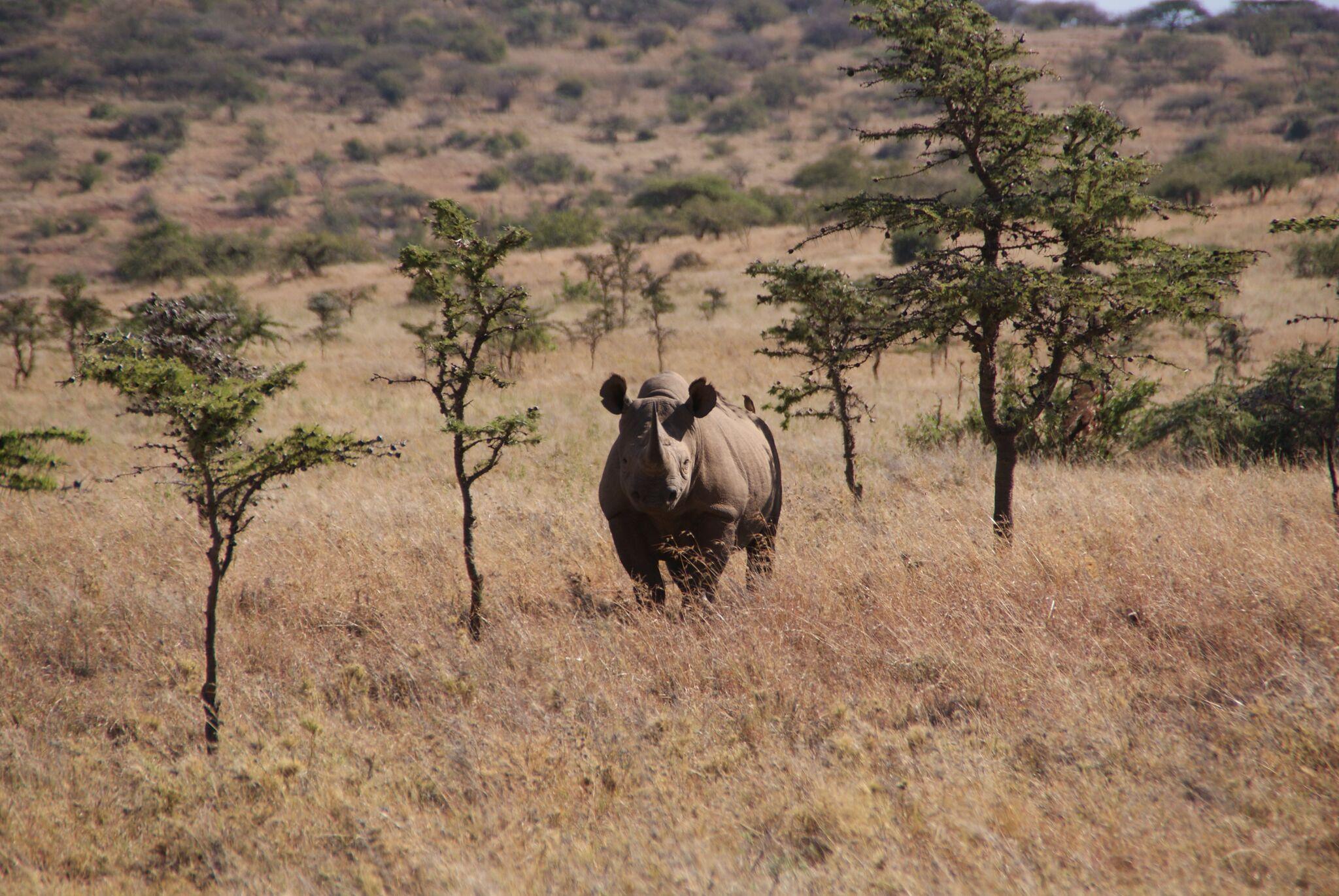Article hero image - black rhino