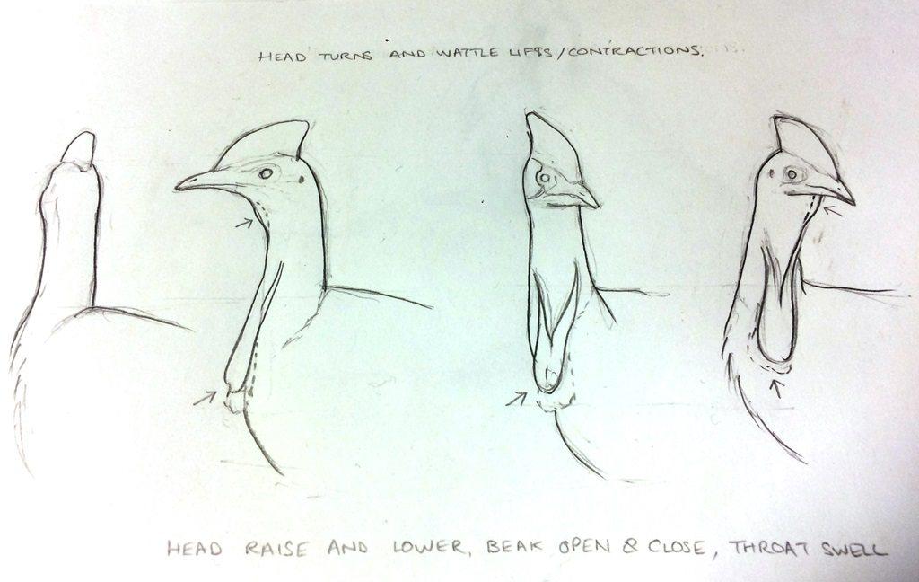 Illustration of cassowary head turns