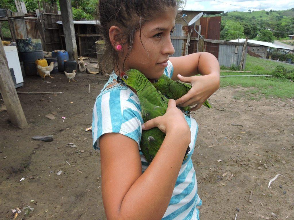 Ecuador Amazon parrots being kept as pets