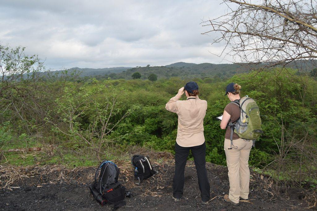 Ecuador Amazon parrot survey