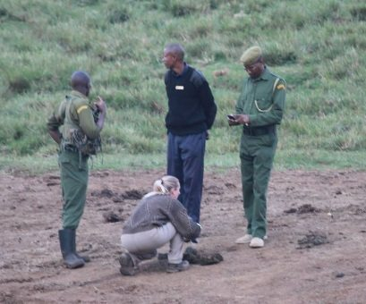going-in-to-collect-fresh-dung-under-the-supervision-of-kws-rangers, Africa, Chester Zoo scholar, science,  animal health and wellbeing