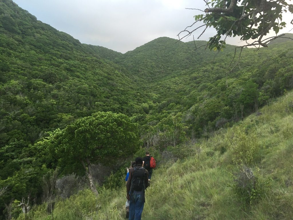 Team hiking into Fairy Walk to find mountain chicken frogs