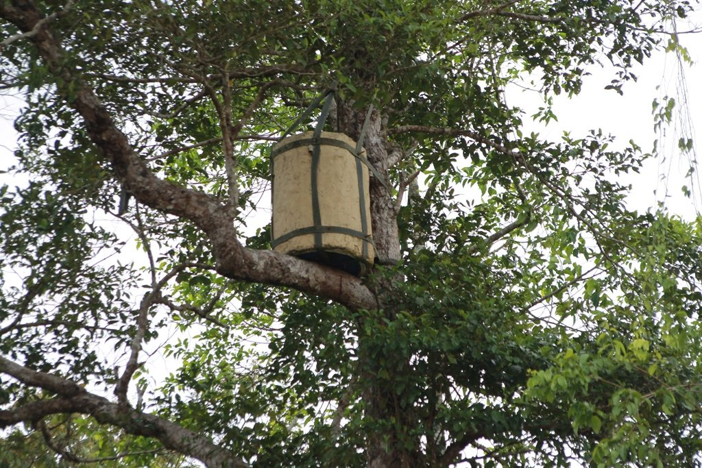 Artificial hornbill nest in tree