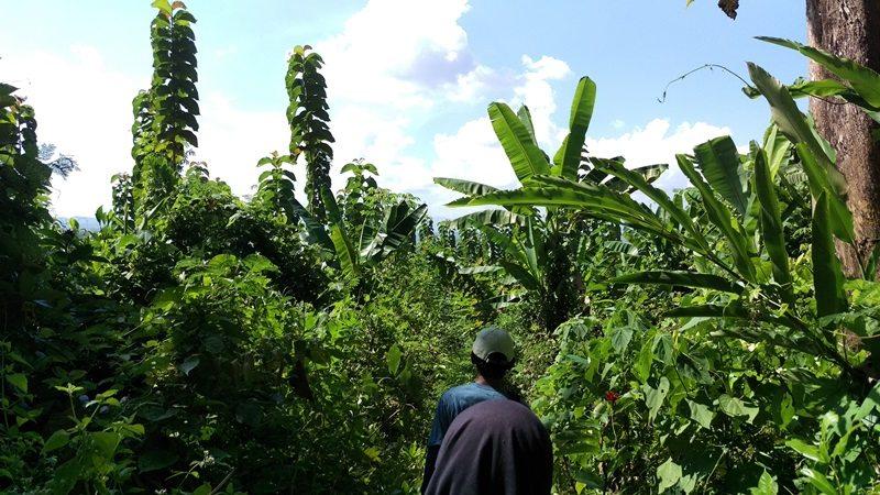 Walking through the rainforest in Java