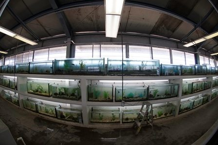 Some of the tanks at the conservation breeding centre