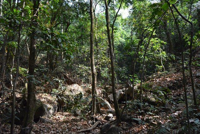 Untouched and unburnt pristine forest