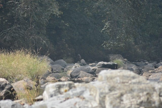 We were observed by a small group of olive baboons by the river