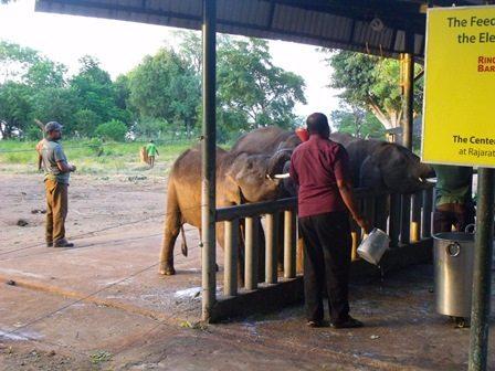 Feeding time at Udawalawe Elephant Transit Home Photo credit: Helena Stokes