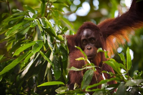 Race for the Rainforest | Chester Zoo