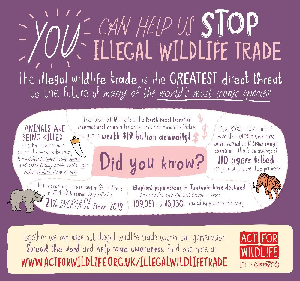 Illegal wildlife trade infographic