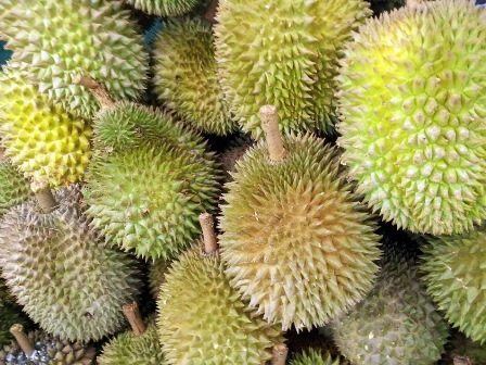 Durian fruit - although scarce in the forest, these are one of an orangutans favourites, a rare delicacy