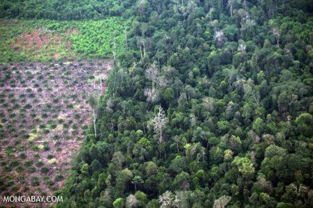 Deforestation for oil palm development. Photo credit: Mongabay.com