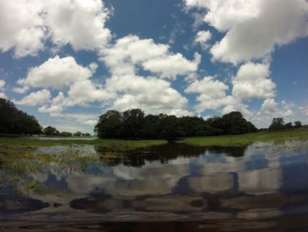 The flooded plains of the Pantanal. Photo credit: Arnaud Desbiez