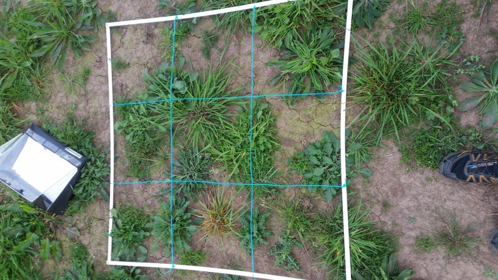 Quadrat wildflowers survey