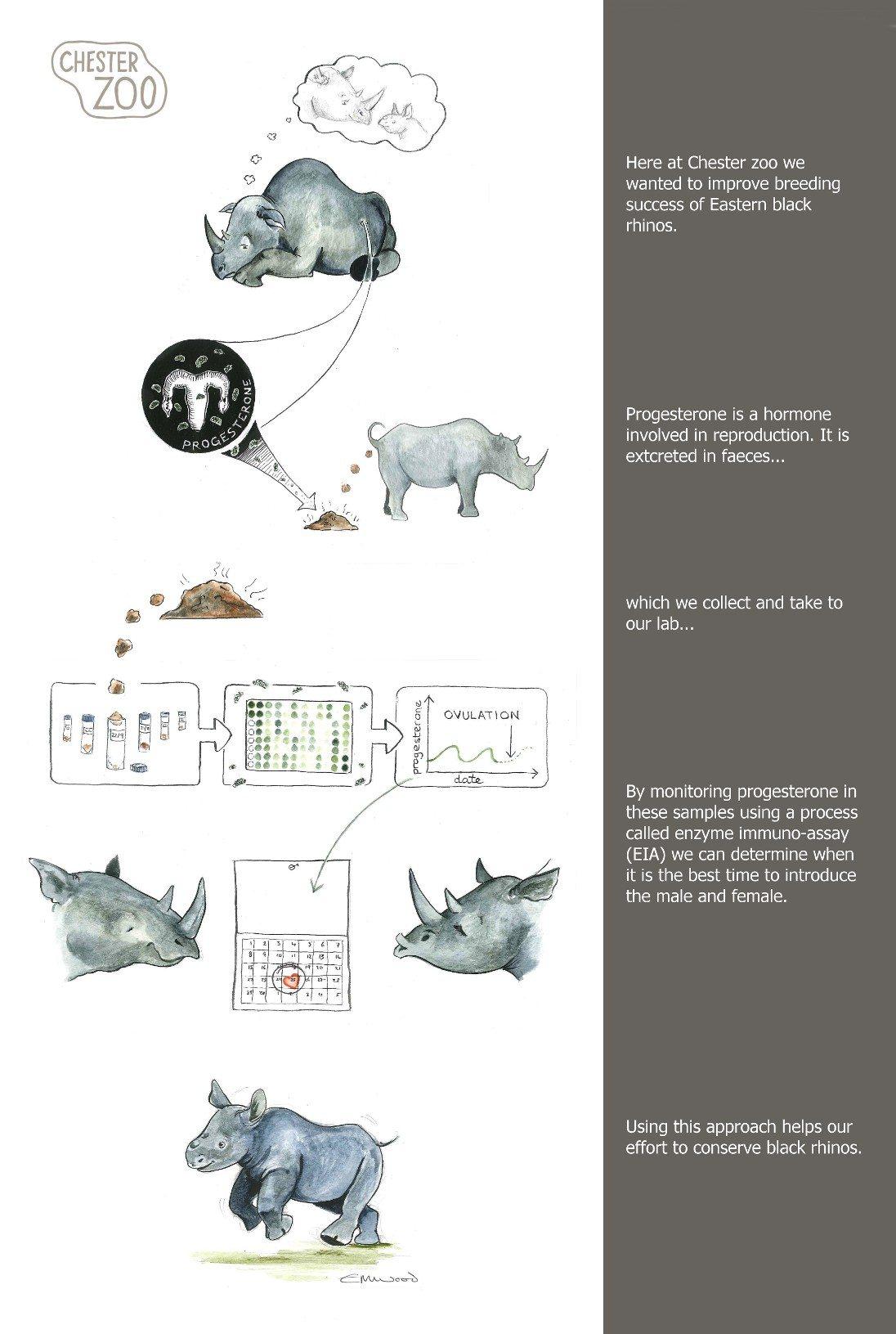 Rhino breeding illustration