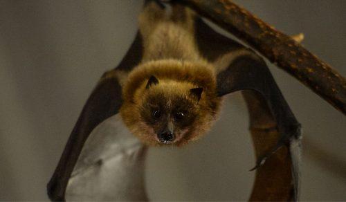 Fruit Bat Forest | Walkthrough