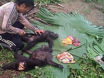 Two Sulawesi black macaques butchered for bush meat reported to TRAFFIC via Wildlife Witness app
