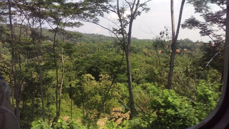 View of the rainforest from the train