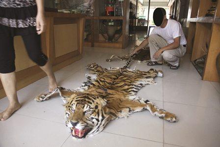 Tiger skin. Photo credit: TRAFFIC