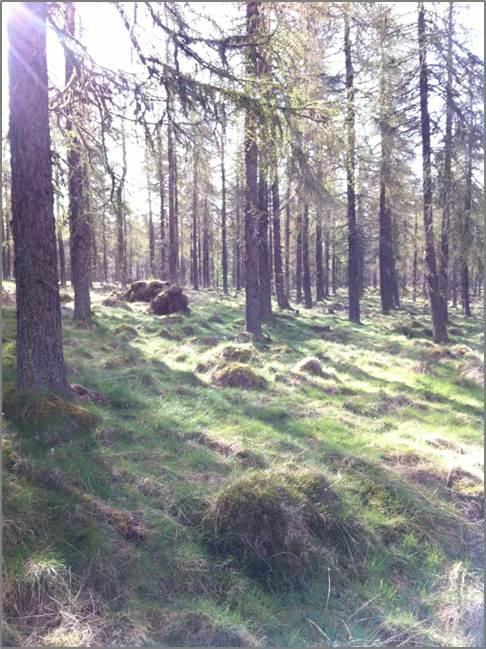 Woodland site. Photo credit: Lydia Murphy