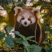 Christmas Shopping | Chester Zoo