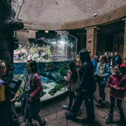 Junior Rangers   Chester Zoo
