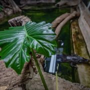 Hollywood Plants | Chester Zoo